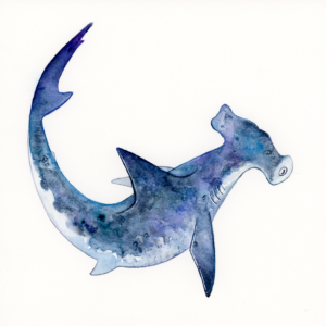 "Hammerhead Shark - 2018 - 8""x8"" - Watercolor on Watercolor Paper"