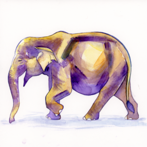 "Asian Elephant - 2018 - 8""x8"" - Watercolor on Watercolor Paper"