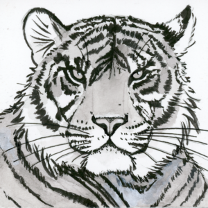 "Tiger (Inktober) - 2018 - 3""x3"" - Ink on Watercolor Artboard"