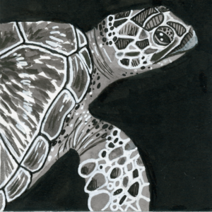 "Sea Turtle (Inktober) - 2018 - 3""x3"" - Ink on Watercolor Artboard"